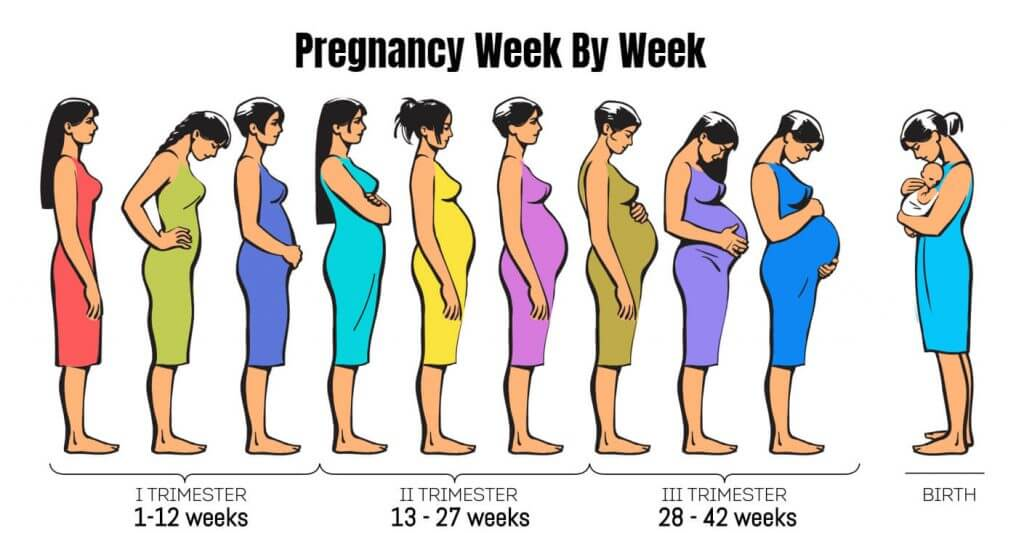 Week By Week Pregnancy - First Trimester & Its Stages